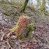 Bracket fungus noid 8765