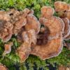 Bracket fungus noid 8774