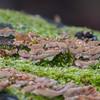 Bracket fungus noid 2074