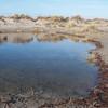West Wittering dune ponds 8784