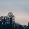 Arundel WWT sunset 2296