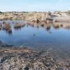 West Wittering dune ponds 8782
