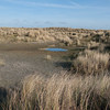 West Wittering dune ponds 8781