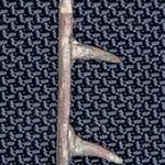 copper alloy mount c 1500-1700 (1)