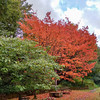 red tree noid 357