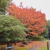 red tree noid 824