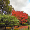 red tree noid 485