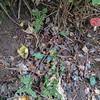 Fly Agaric, Amanita muscaria 906382