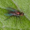 fly noid 1448