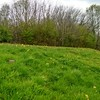 Kithurst meadow with Cowslips, Primula veris (2)