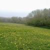 Kithurst meadow