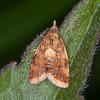 Yellow-spot Twist, Pseudargyrotoza conwagana 3154