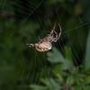 spider noid 4377