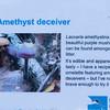 Amethyst Deceiver, Laccaria amethystina 6654