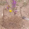 heather sandcastle 0777