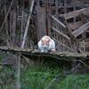 Domestic Cat, Felis catus 0498