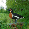 Lego Red-breasted Goose, Branta Ruficollis 109