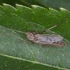 fly noid 5491