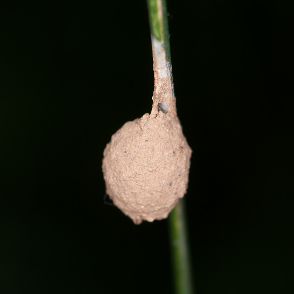 insect nest 7287