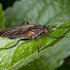 fly noid 8383