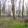 Rewell Wood (1)