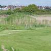 Grey Heron, Ardea cinerea on golf course 2353