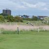 Grey Heron, Ardea cinerea on golf course 2354
