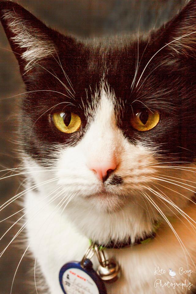Black and white cat, Glasgow