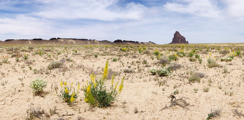 "Shiprock & Flowers - Navajo Nation:  File# 1123568  <a href=""http://www.tom-hill.biz/Galleries/Scenics/New-Mexico/20953542_PwbVsq#!i=1664712394&k=HJMDQTC"">  Link To Original Image </a>  I had never been to Natural Bridges National Monument.  Really, I wasn't well prepared for doing real shooting there and classified this visit as a Scouting Trip.  I'll return.  Maybe it'll be in 2012.  JUNE  Except for a weekend trip to Santa Fe, New Mexico I have nothing to show for June 2011.  I'm a bit embarrassed to say that because there's fantastic imagery out there somewhere.  JULY  This month started relatively slowly--recovering from the inertia of June, I guess.  But, it finished on a high note with two events.  First, my only visitors of the year, my friends from Massachusetts were here on their Epic Trip West which included a visit to my house.  Then, I traveled to Moab where I hadn't been in a couple of years.  This was all done on my bike with a couple of very long days in the saddle.  Still, it was a great trip.  The best was camping out at Canyonlands National Park.  This was the first time I took images in the middle of the night taking advantage of my Nikon D3's superior low light performance."