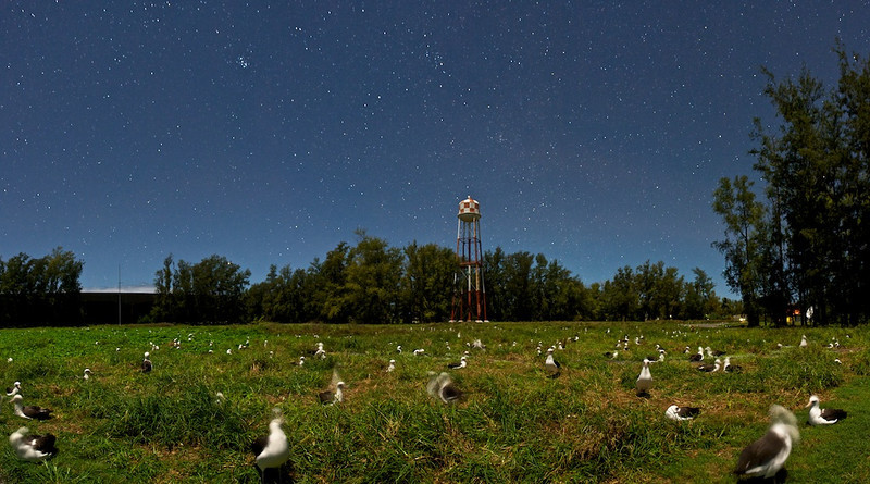 "Field of Albatross on Midway Island at Night - Midway Island, North Pacific, File #1124260  <a href=""http://www.tom-hill.biz/Galleries/Scenics/AlaskaMidwayHawaii/20952122_5BDLdT#!i=1706916557&k=TJc8LWL"">  Link To Original Image </a>  At first glance you might think this is an image taken in the light of day.  Then you see the stars.  Then you might think I used some trickery of photography to merge stars with the day lit field of birds.  Well, no trickery involved.  It's just a long exposure at night with the moon just right.  You know it's a long exposure because the birds aren't sharp.  They're moving which makes them look a little smeared like the ones in the foreground.  This is a typical field in Midway at this time of the years.  The eggs haven't been layer yet but they're coming."