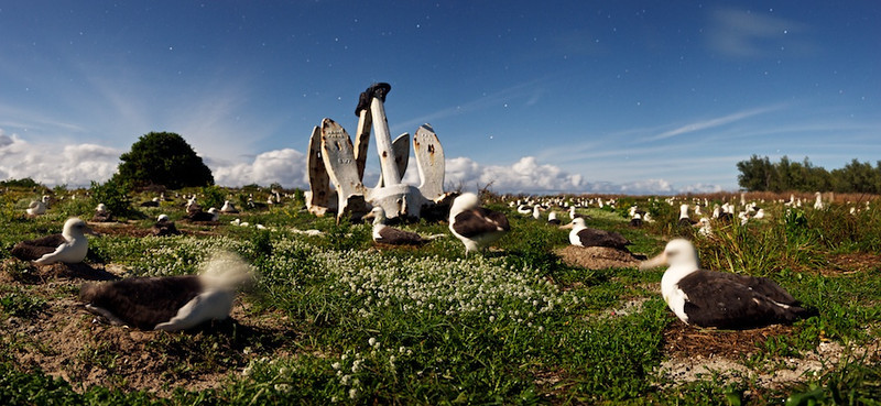 "Field of Albatross - Midway Island, North Pacific, File # 1124912  <a href=""http://www.tom-hill.biz/Galleries/Scenics/AlaskaMidwayHawaii/20952122_5BDLdT#!i=1664568732&k=QgvQDBR"">  Link To Original Image </a>  Here's another image that looks like it was shot at nigh noon.  You're savvy enough to see the tell-tale signs of a long exposure night image with the blurry foreground birds.  The moon is full bright here--full moon not two days previous--easily lighting the birds and everything else.    The anchor is a left-over from when the US Navy administered the island.  Now it's managed by the US Fish & Wildlife service.  I hear talking to employees managing the island that it's the largest budget item in the FWS because it's the only property managed by the FWS with a working runway.    BTW, from a pilot perspective, it's a very nice runway."