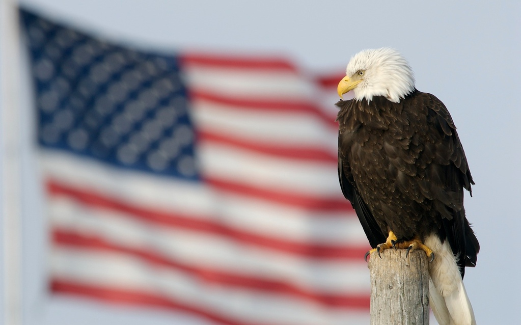 """CREATIVITY ON THE FOURTH OF JULY - 4 JULY 2012  Bald Eagle and Flag - Homer, Alaska, File# 0704804  <a href=""""http://www.tom-hill.biz/Galleries/Birds/Raptors/20928798_32SRzC#!i=1663615546&k=dBDWMDW&lb=1&s=A"""">  Link To Original Image </a>  It's the fourth of July here in New Mexico.  I guess that's obvious for everyone in the United States.  For those not from around here, this day is the birthday of our nation.  It's the anniversary of when a group of relatively well-to-do men announced the colonies intention to separate from the mother country, England.  As is well documented in history books, this was not an easy task.  In fact, the unanimity of Continental Congress was quite the amazing feat considering the substantial political differences there were between the various factions represented.  I'm sure there were critical moments when individual members made up their minds to vote for the declaration.  I'm sure a healthy dose of imagination, creativity, and innovation was involved in the whole process.  Why would I say imagination was required of these delegates?  Let's consider the political environment back in those days.  Mostly these delegates were wealthy and well respected people from their homes.  These were not rabble rousers.  These were not anarchists.  These were doctors, lawyers, teachers, shop keepers, and property owners.  These were men invested in the establishment.  Many were predisposed to vote against any resolution denigrating the Crown.  Some of them were team players not desiring to rock the boat.  What happened?  Some element had to be involved that allowed all of them to see the future for what it could be and vote to end the tyranny of the Crown.  While probably not documented, it could probably be shown each of declaration signers had to exhibit a substantial capability for imagination.  Each of them had to see a future where the colonies were unbounded from England.  Creativity was necessary to develop arguments and rhetoric convincing e"""