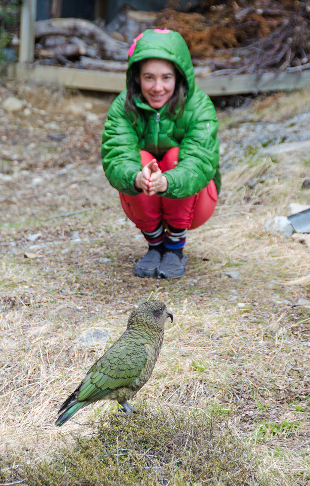 Hanging out with kea around Avoca Hut