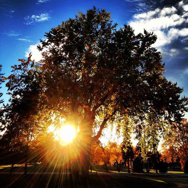 Pretty trees in the fall in City Park. Denver, Colorado (Photo: Kim Olson)