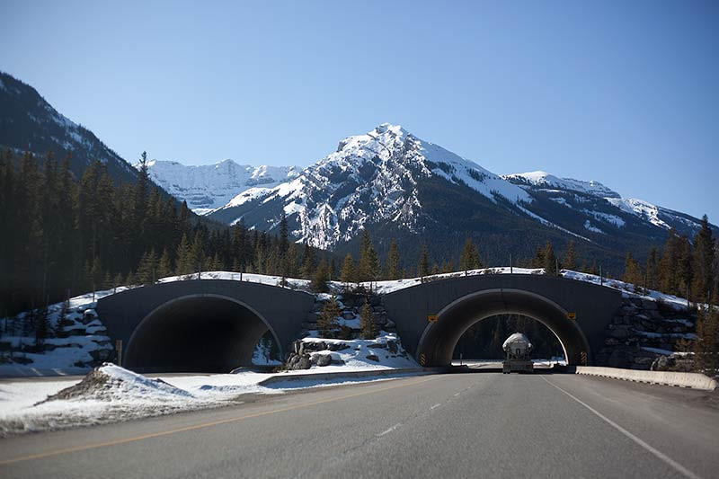 Bridge over the highway for the animals to cross in Canada. (Photo: Kim Olson)