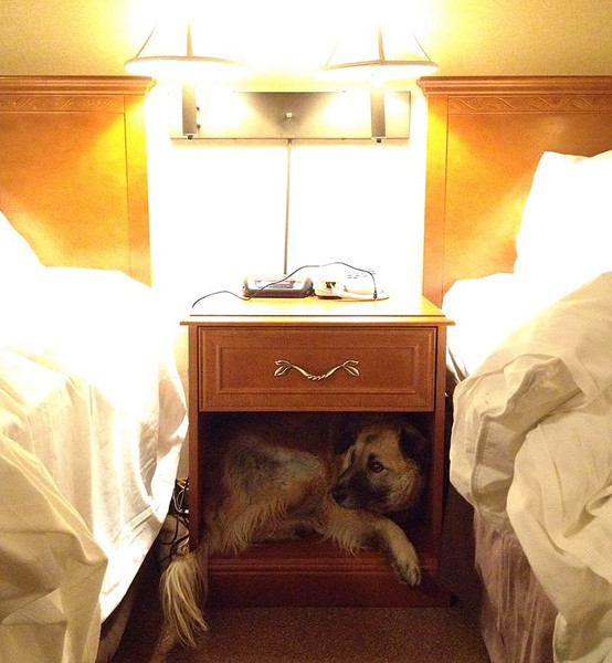 Silly dog scrunched into a nightstand. (Photo: Kim Olson)