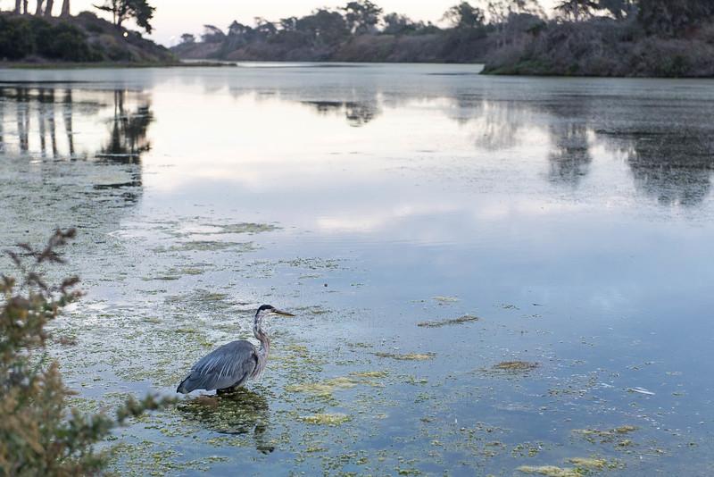 Bird in the Lagoon