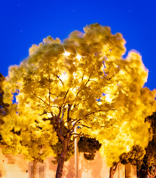 Golden Tree with Light Behind