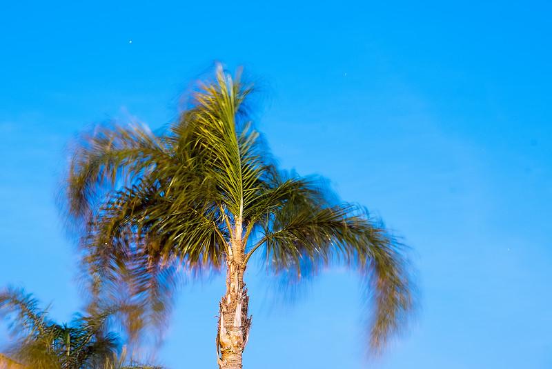 Long Exposure Palm Tree