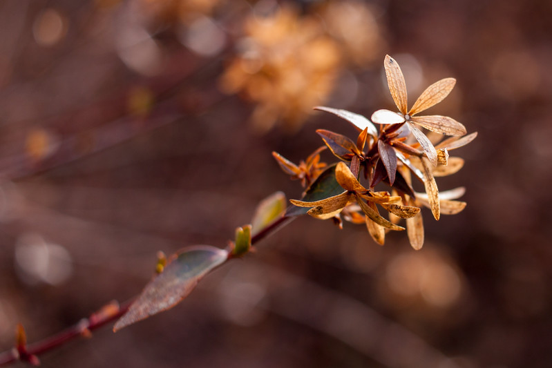Ugly Brown Winter Flowers But I Walked for the Second Day in a Row and Made Pictures!