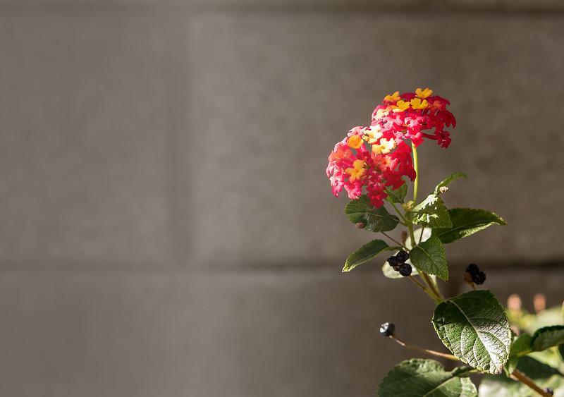 redyellow flowers-8098