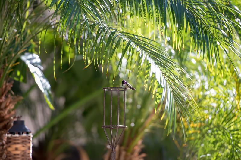 hummingbird-9396