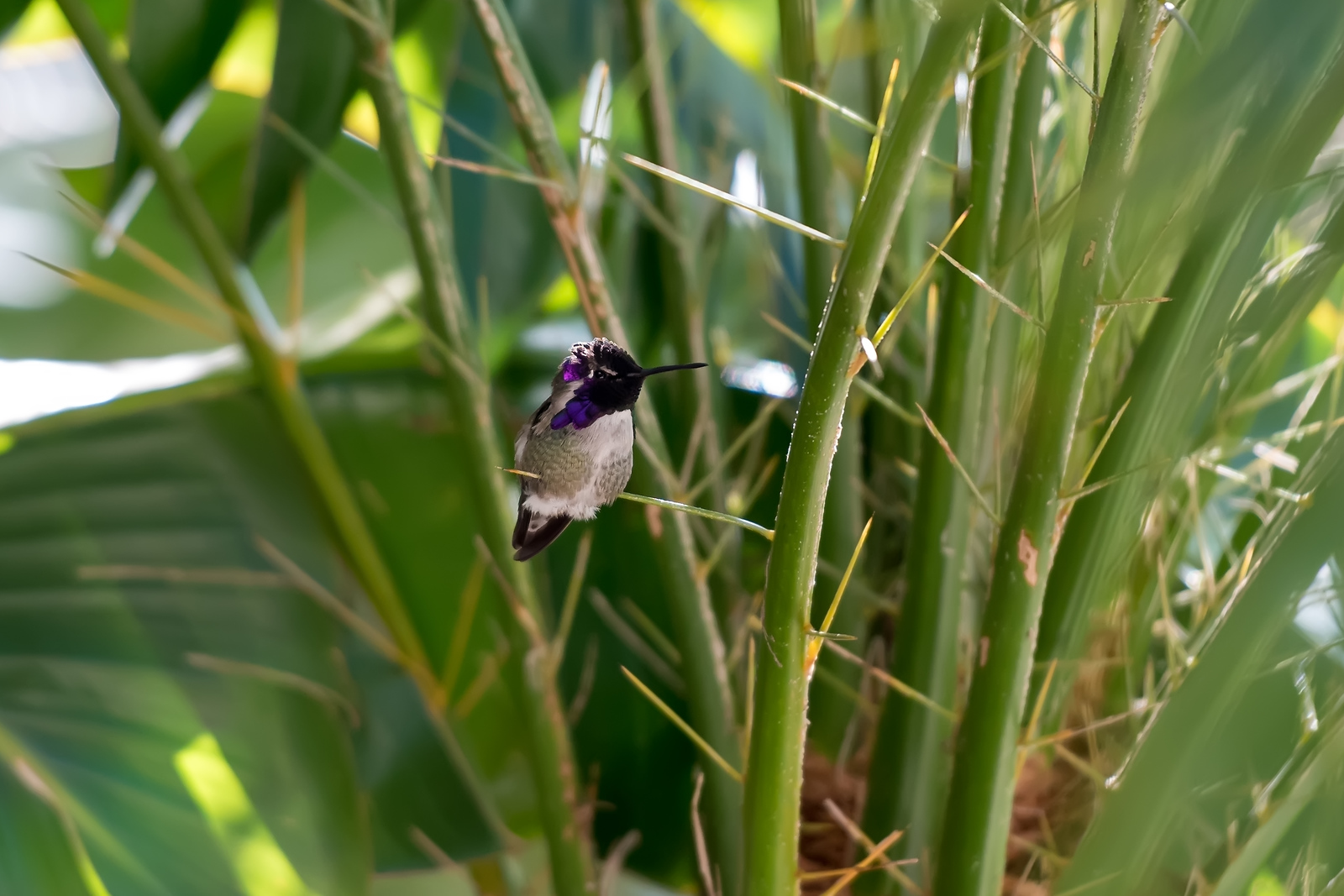 hummingbird-9411