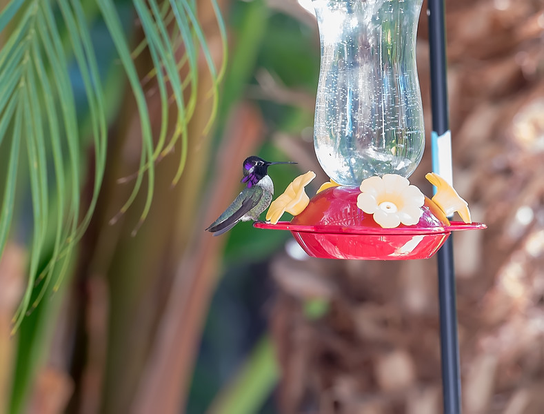 hummingbird-9374b