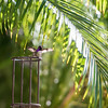 hummingbird-9389