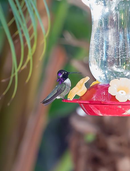 hummingbird-9374
