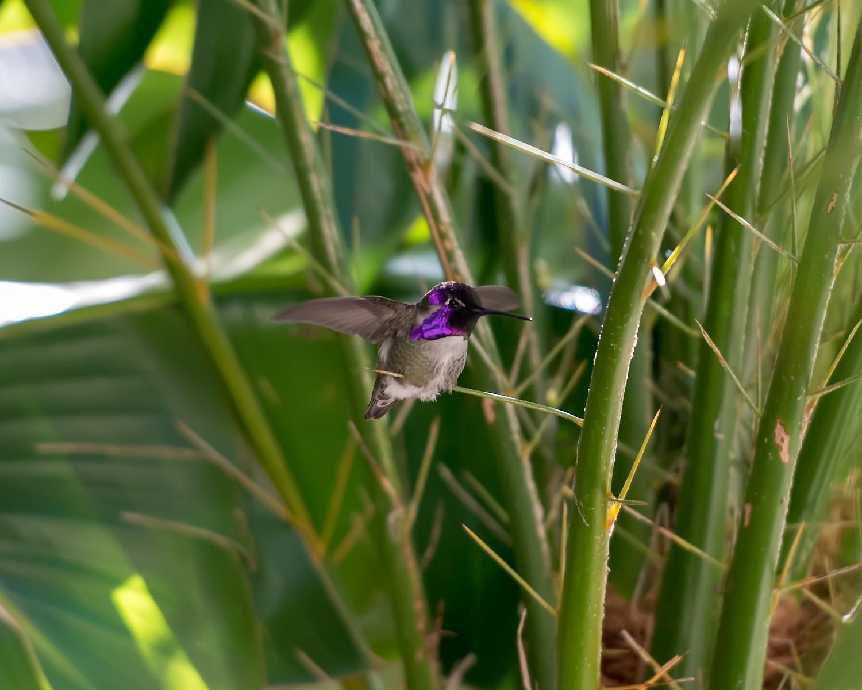 hummingbird-9415