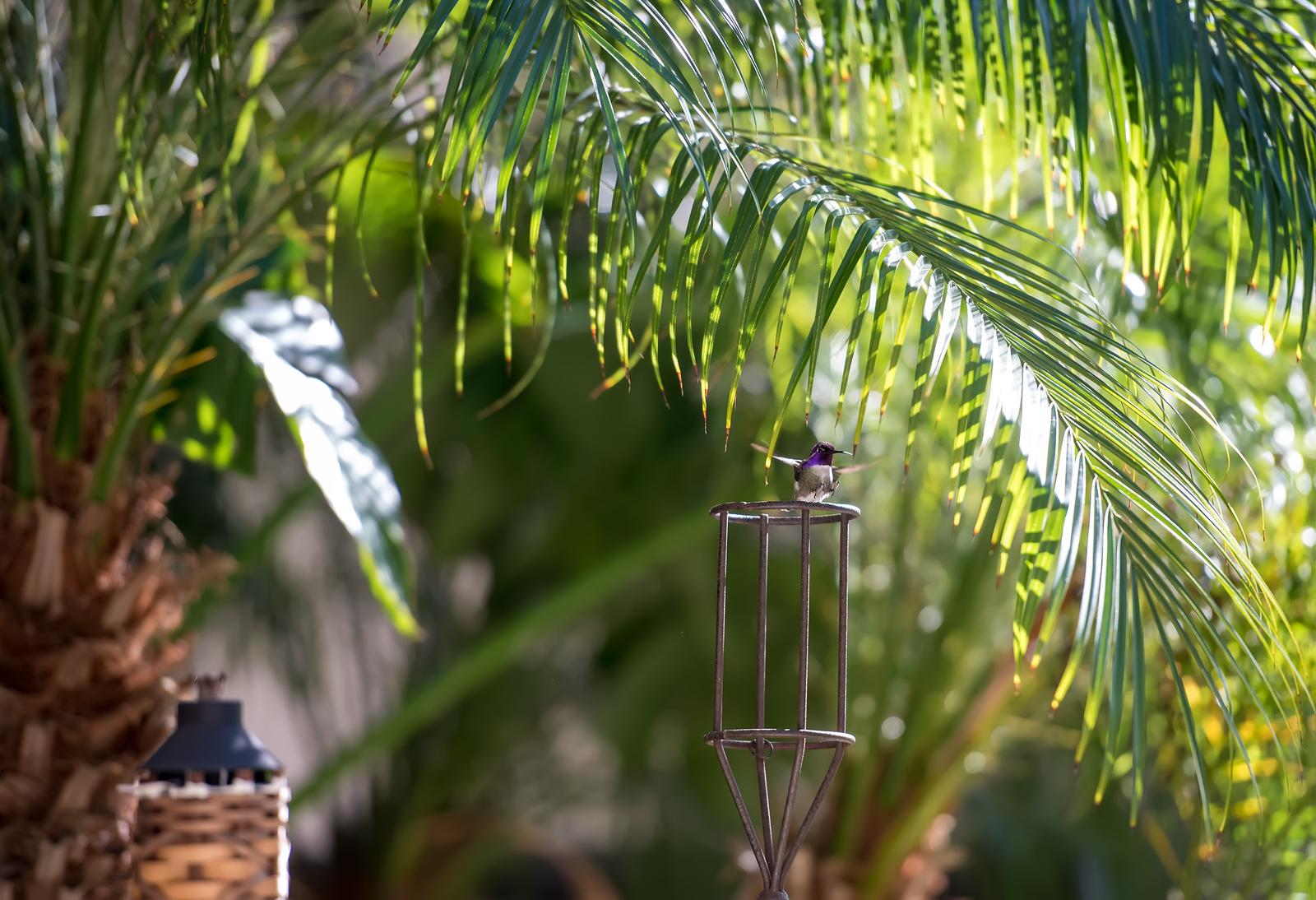 hummingbird-9388