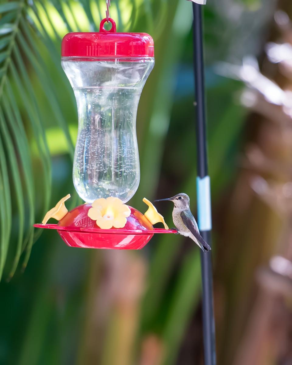 hummingbird-9418