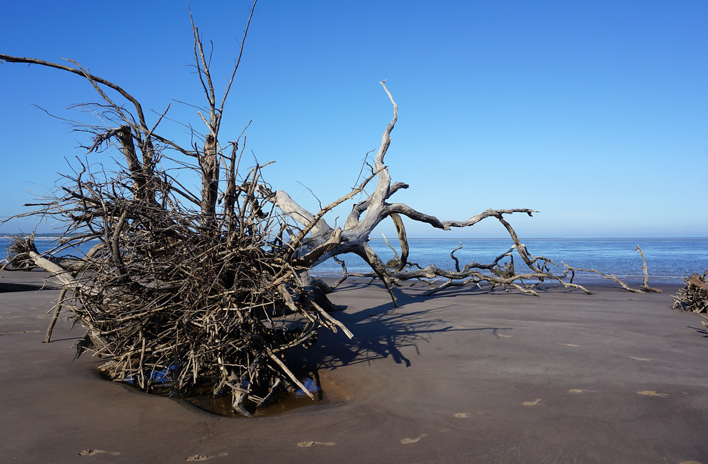 Walk along Driftwood Beach, FL also know as Boneyard Beach
